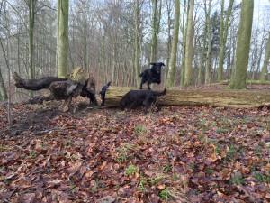 Hundeleg med Tinga (flyvende), Kompis (i forgrunden) og Makker (lige bag træstammen)